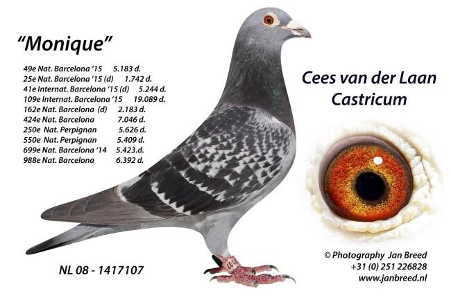 www.janbreed.nl